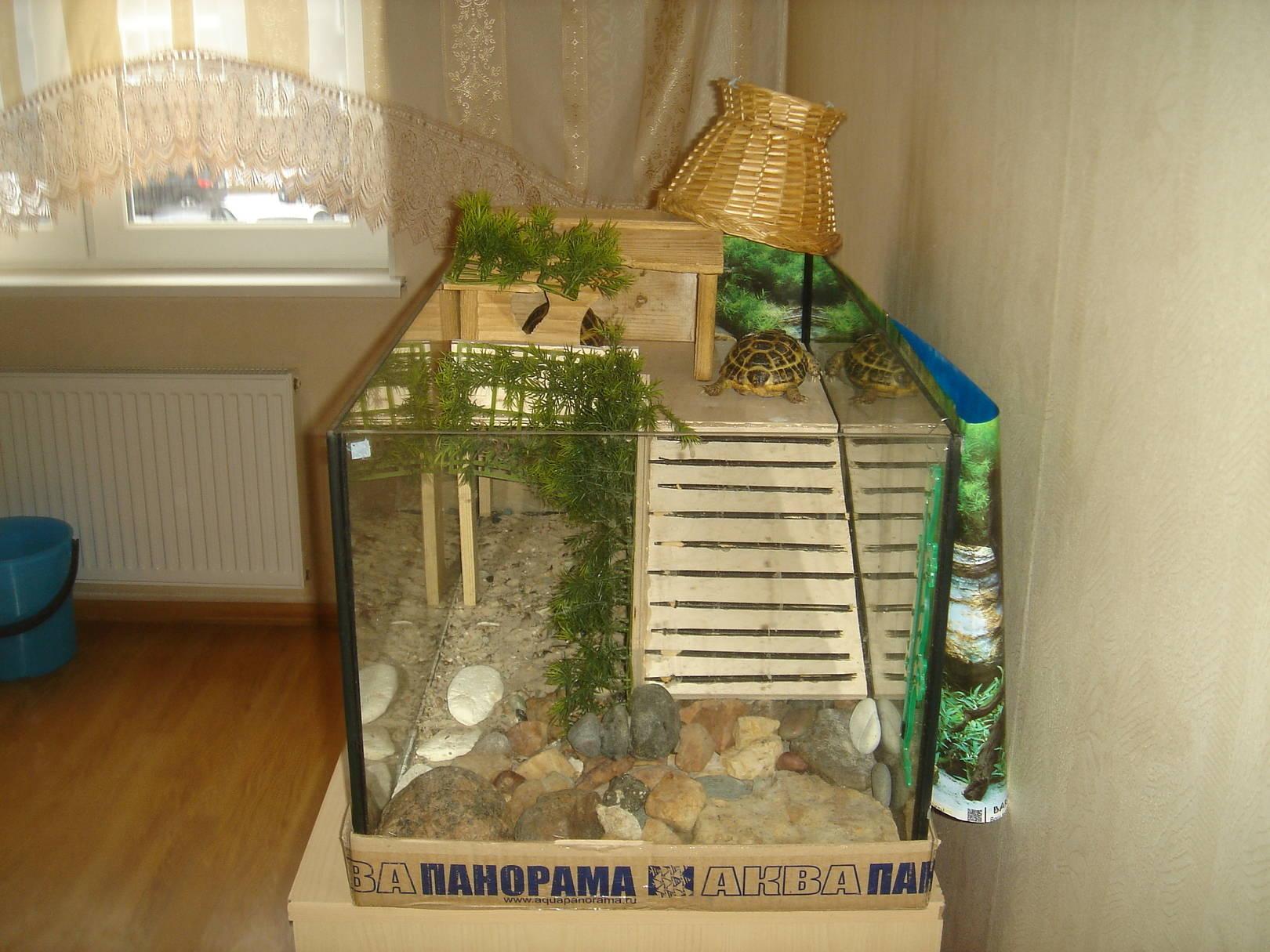 Дом для черепахи своими руками фото 80