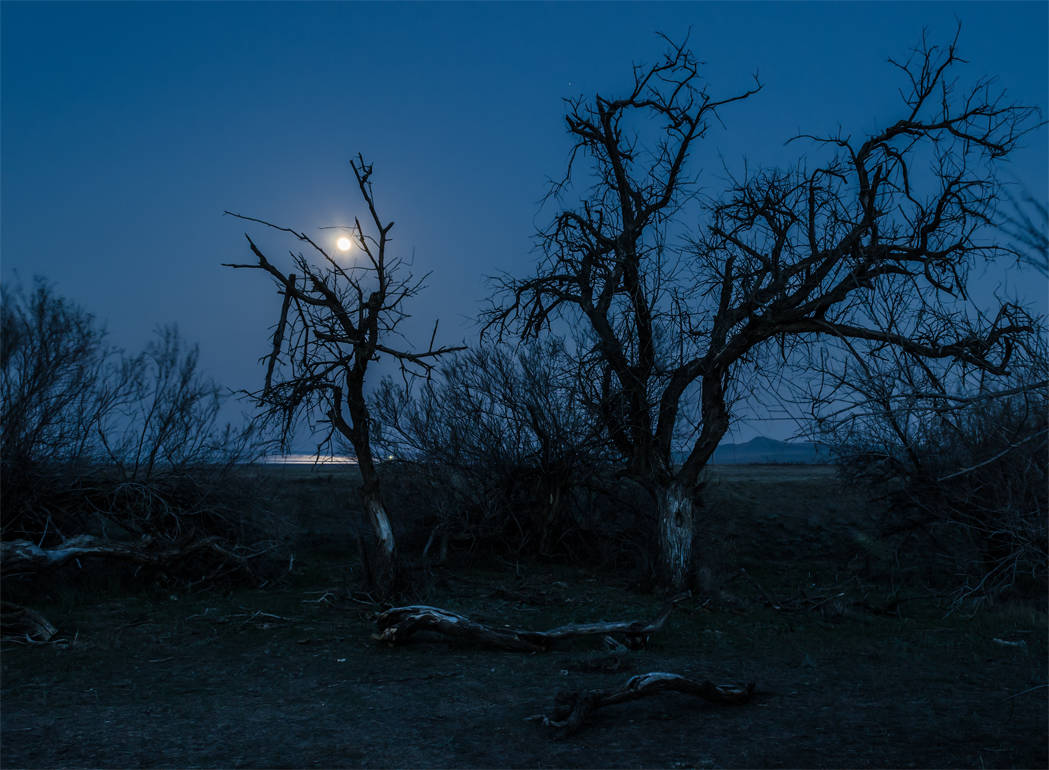 Лунной ночью