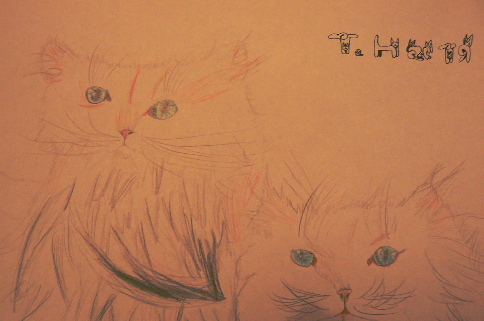 Котята сестрички.