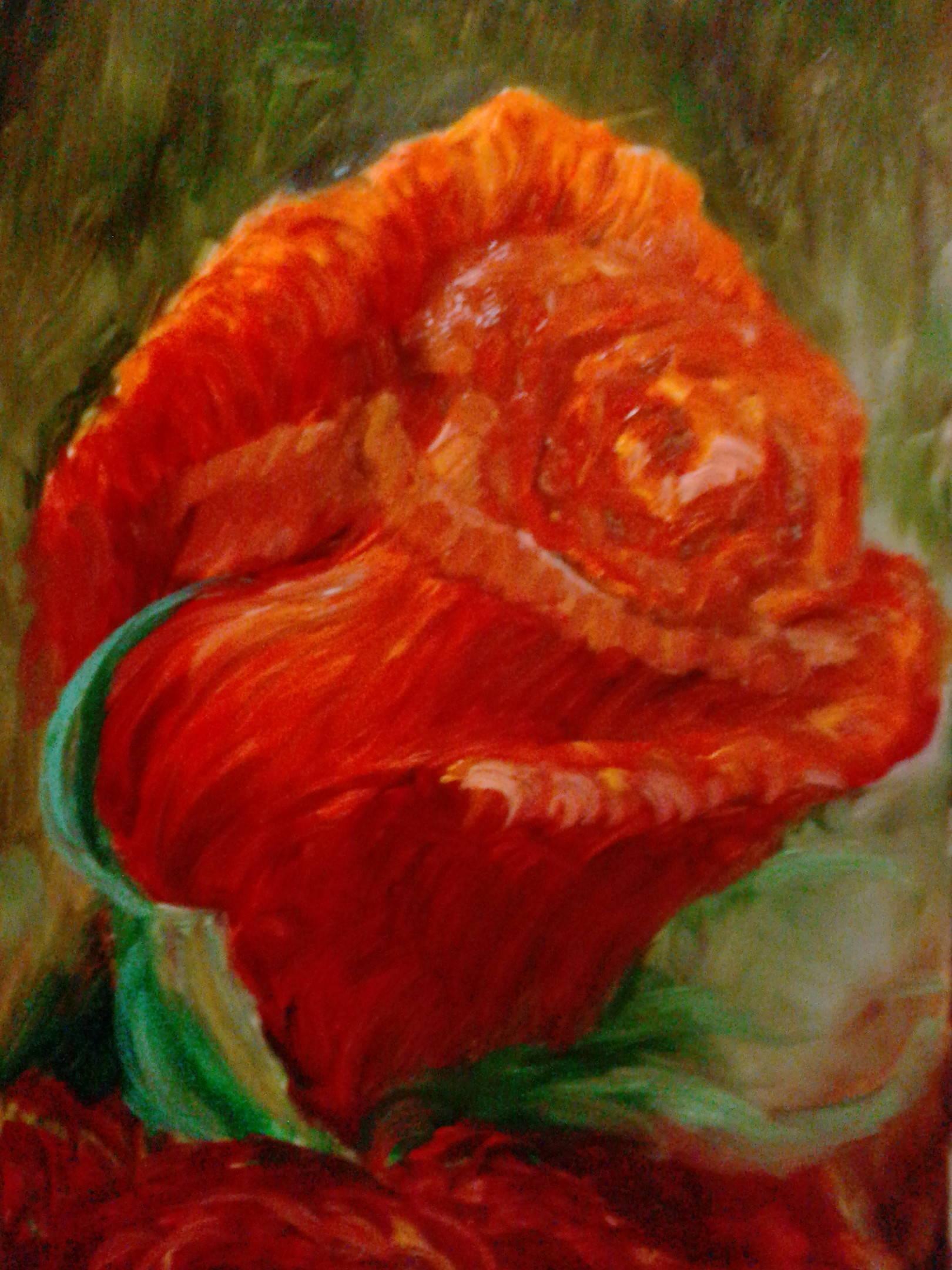 Цветы Розы Вишня
