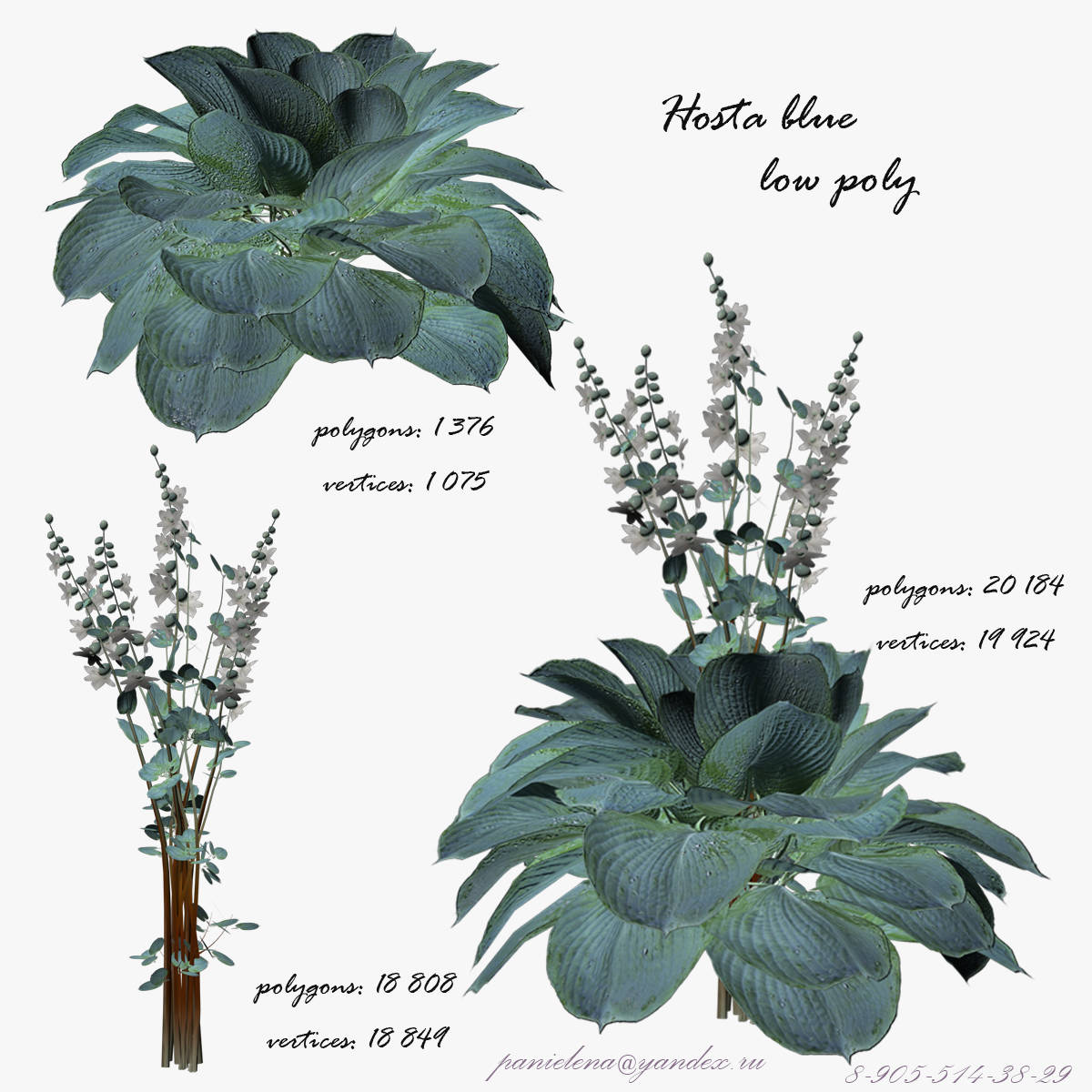 "3D модель растения "" Хоста "". 3D model plants "" Host blue """