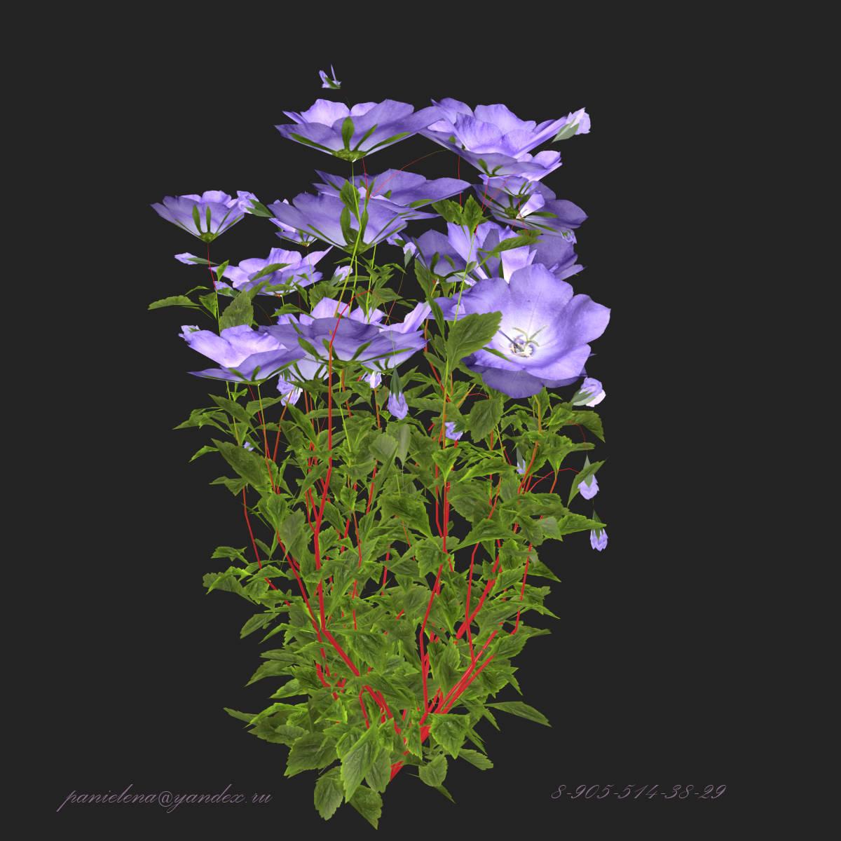 "3D модель растений ""Колокольчики"". 3D model plants ""jingle Bells"""