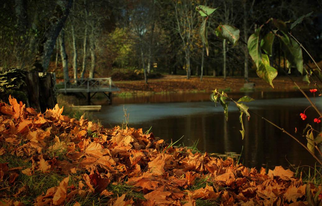Последние листья...