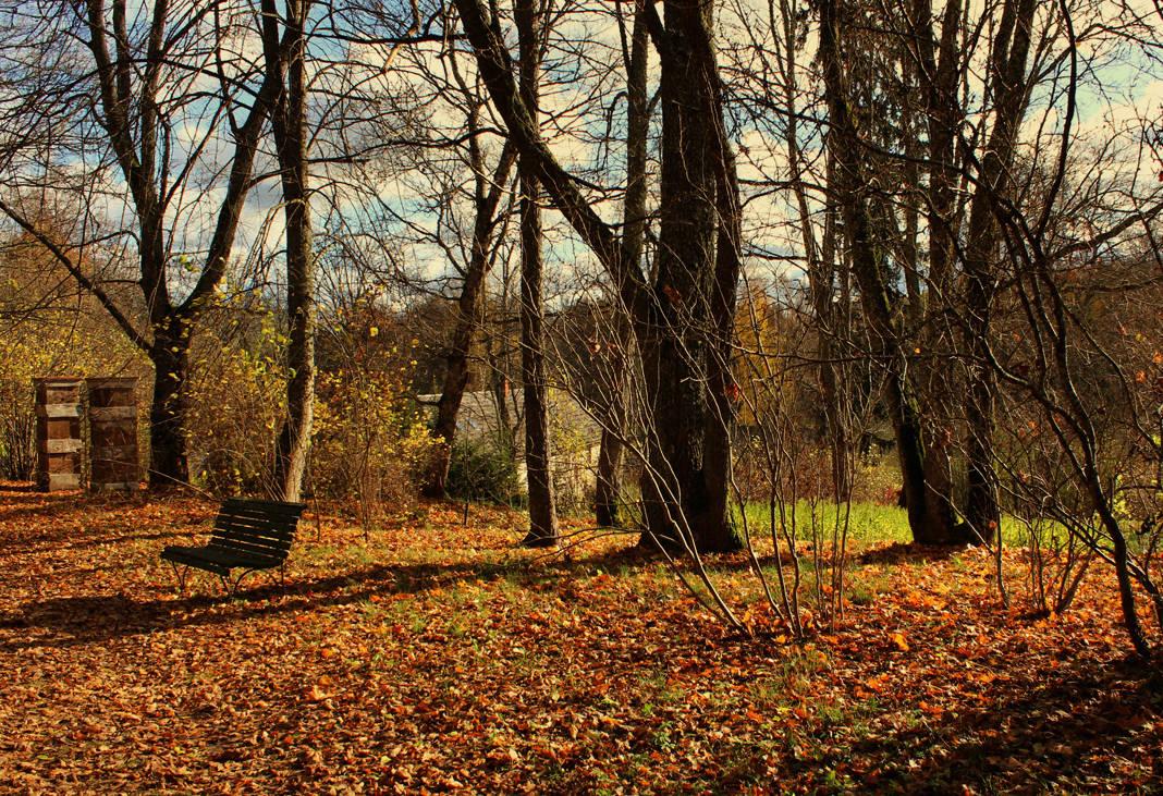 Ковер из жёлтых листьев