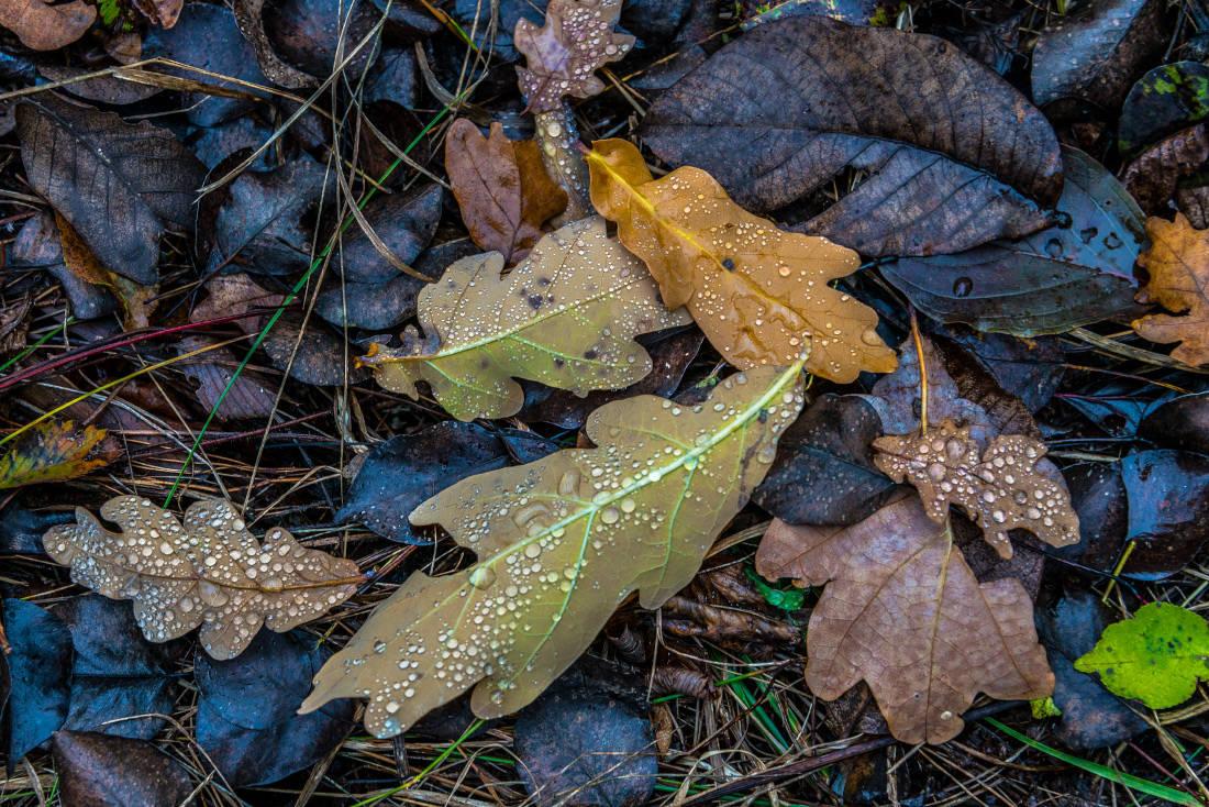 Про листья и осенний дождь