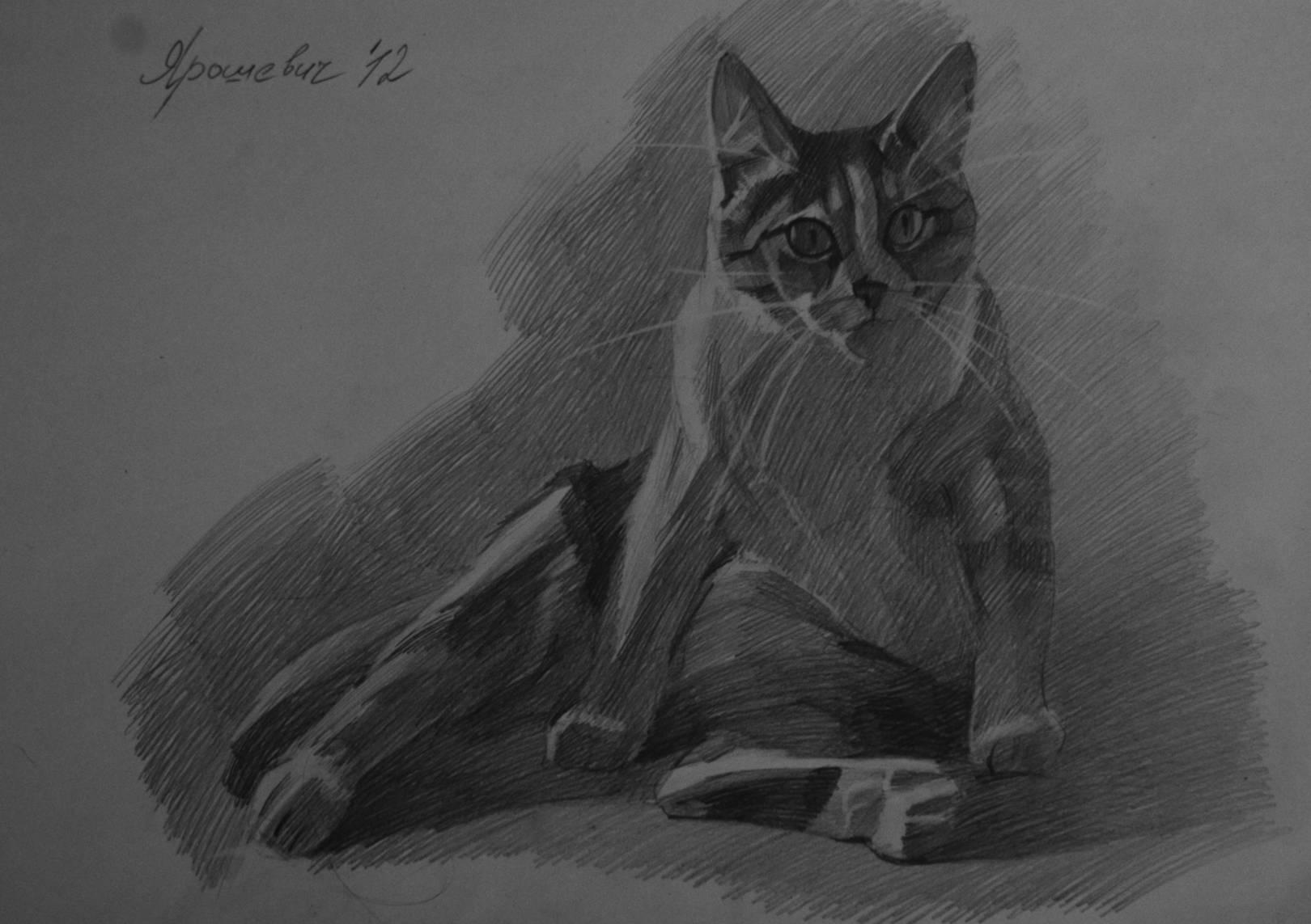Кошки в графике)