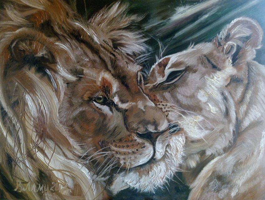 Львы. Ласка. 60х80см Картина маслом. Картина на холсте. Львы на картине. Купить картину можно