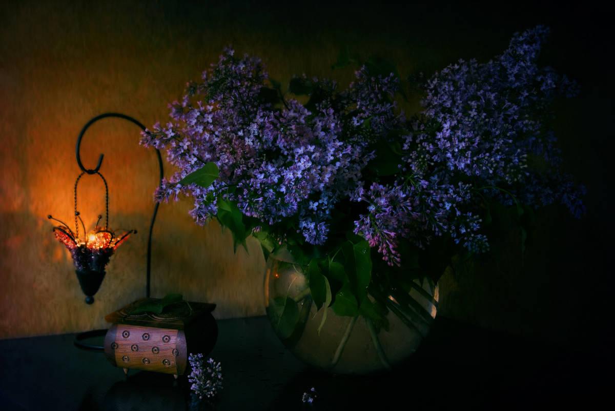 Ночь с ароматом сирени