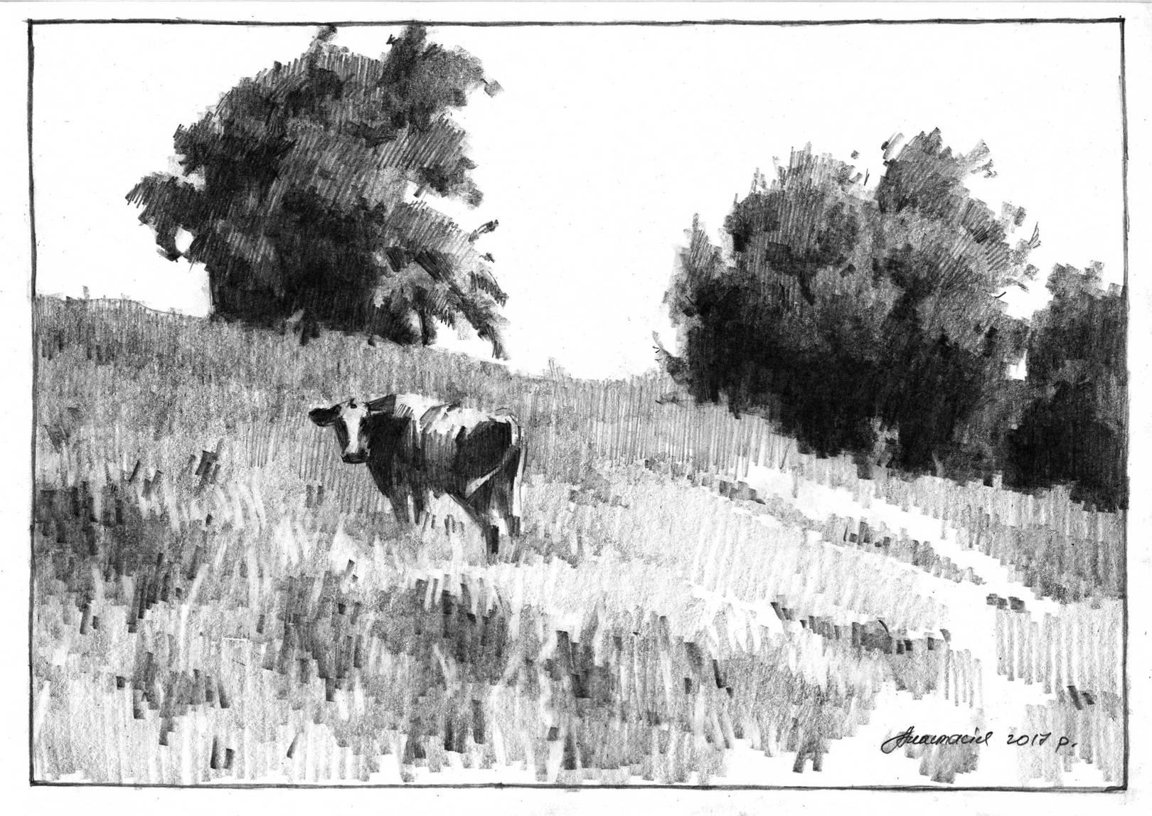 корова из с.Шевченковское (Украина)