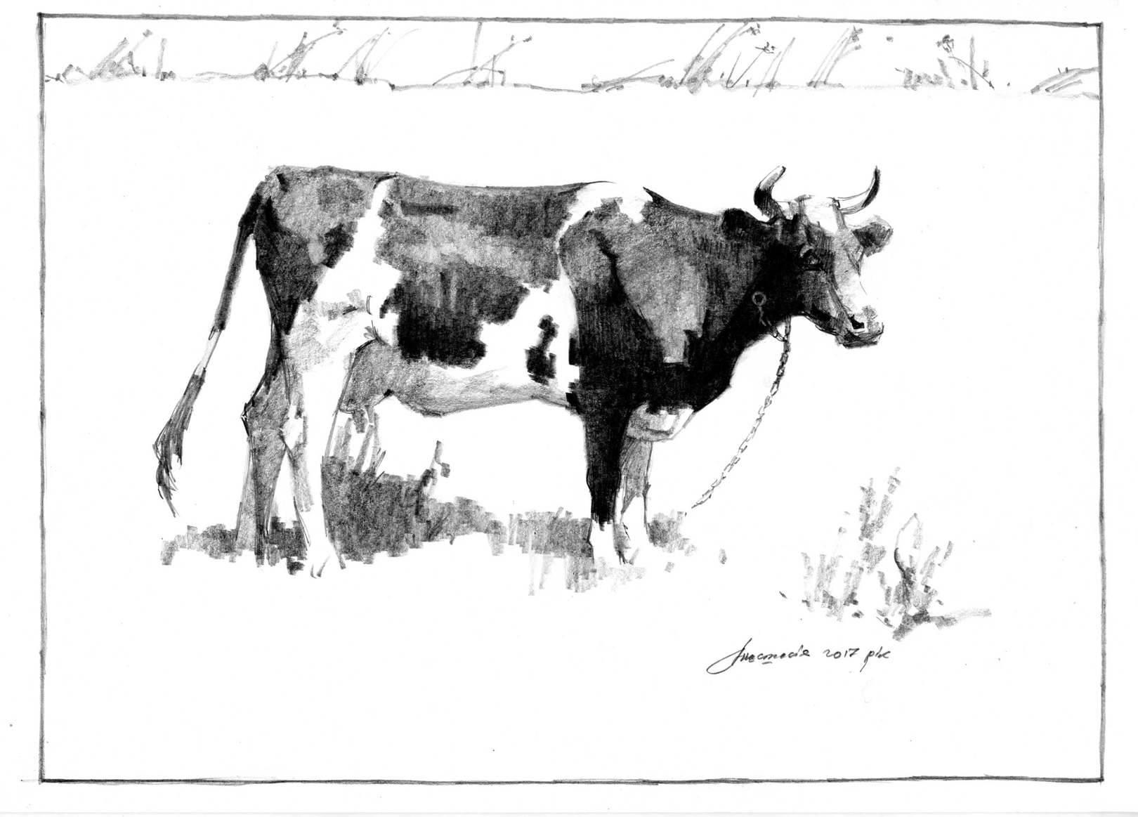 коровы (зарисовки)
