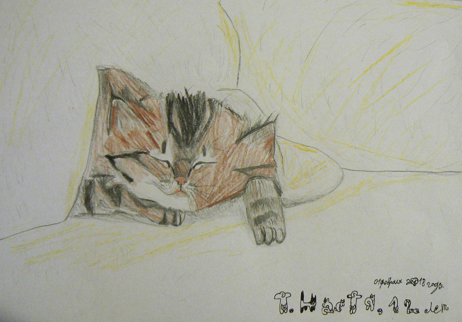 Спящий котёнок в одеяле.