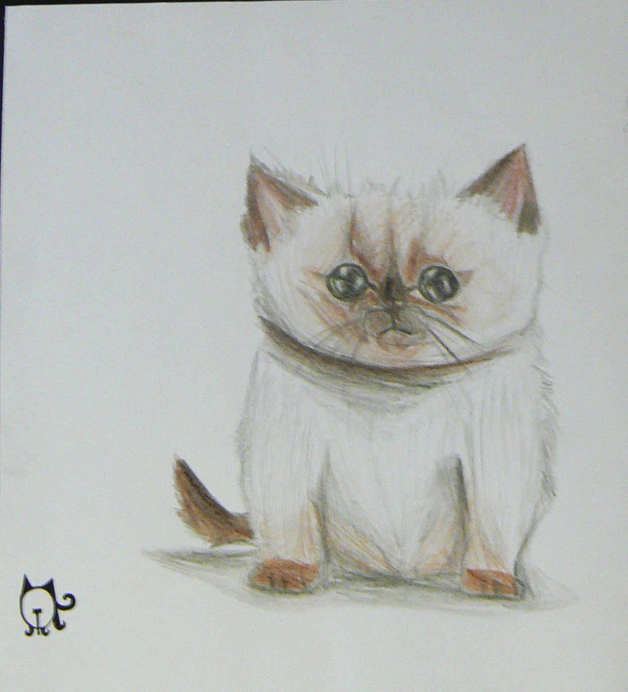 Сиамский котёнок.