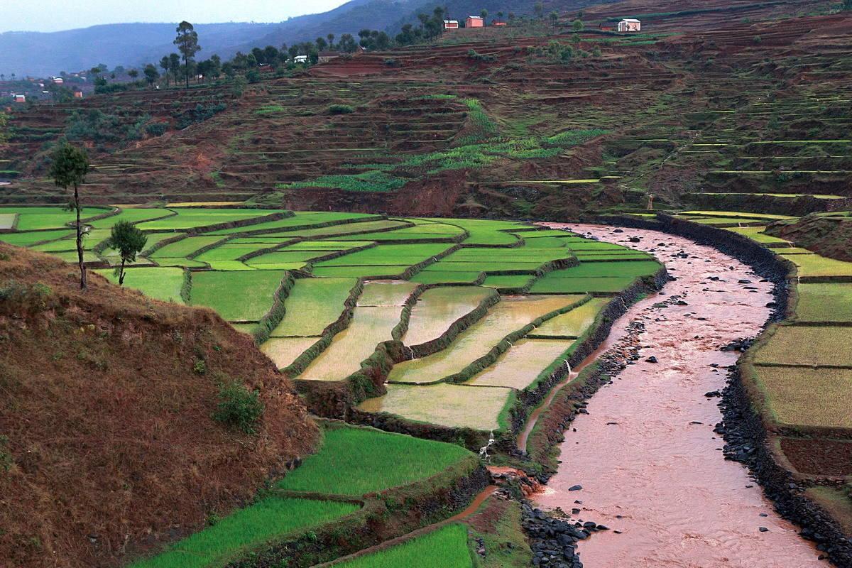 Рисовые террасы на острове Мадагаскар.