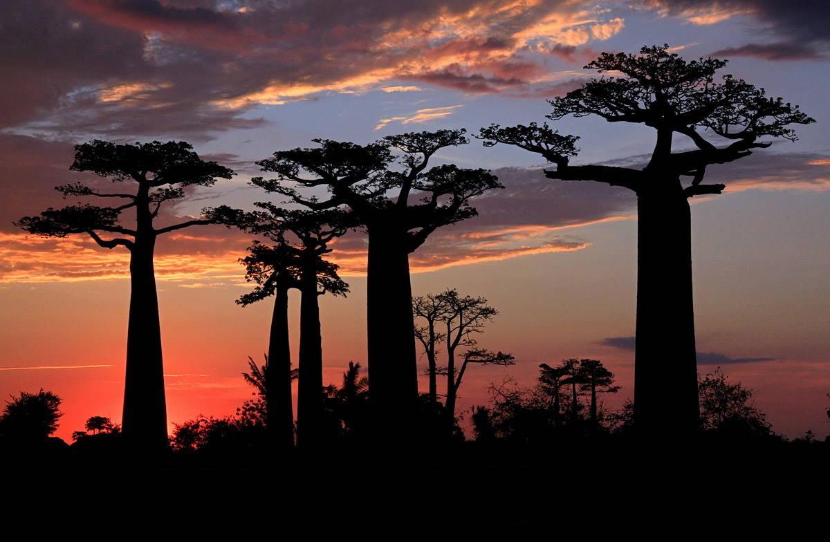Баобабовый закат на Мадагаскаре.