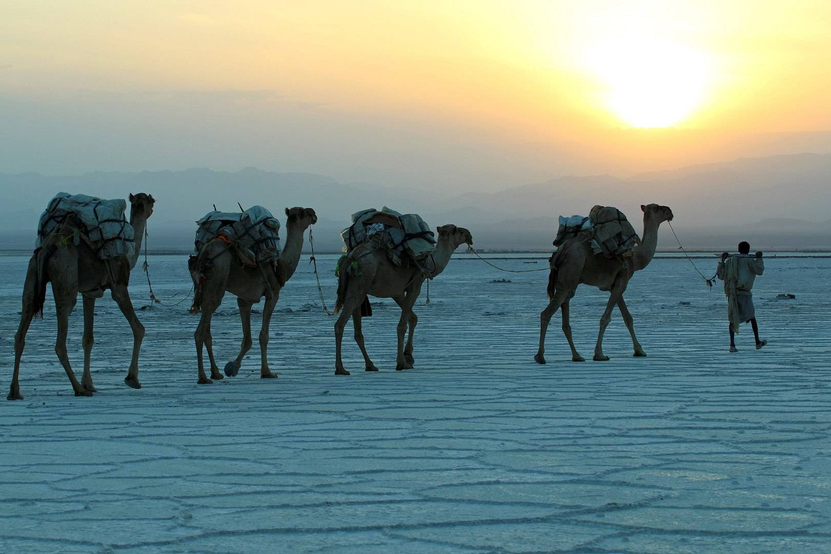 Караван с солью в соляной пустыне Данакиль в Эфиопии.