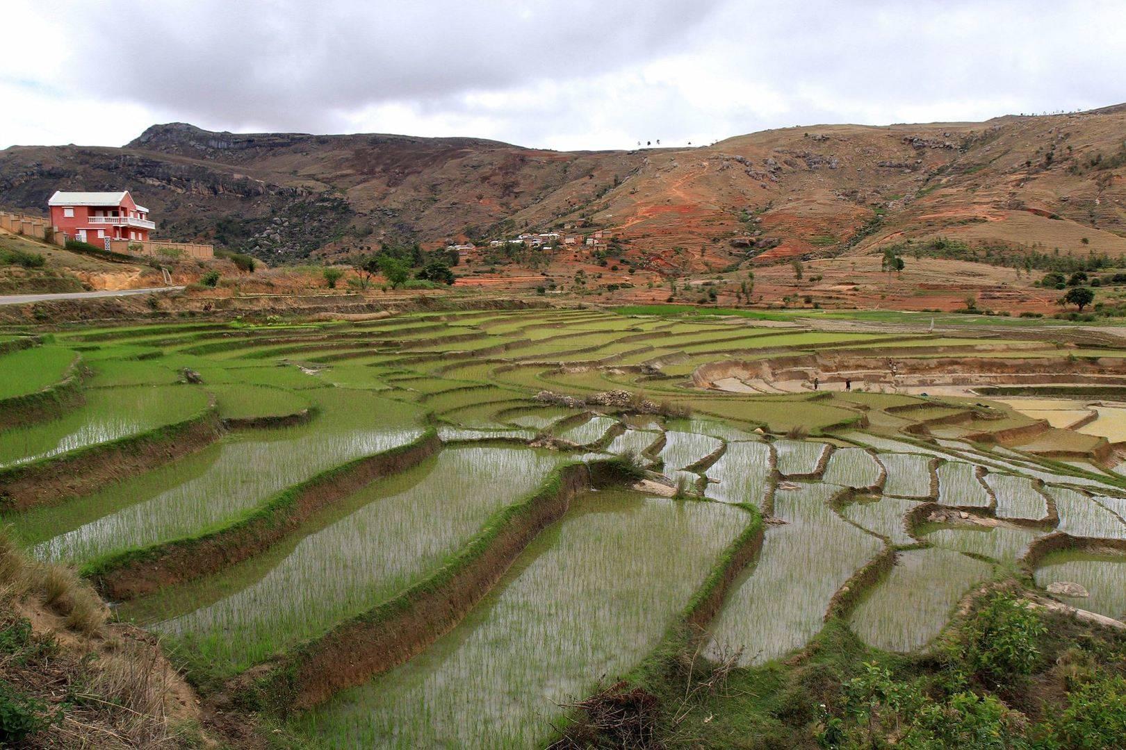 Рисовые террасы на Мадагаскаре.