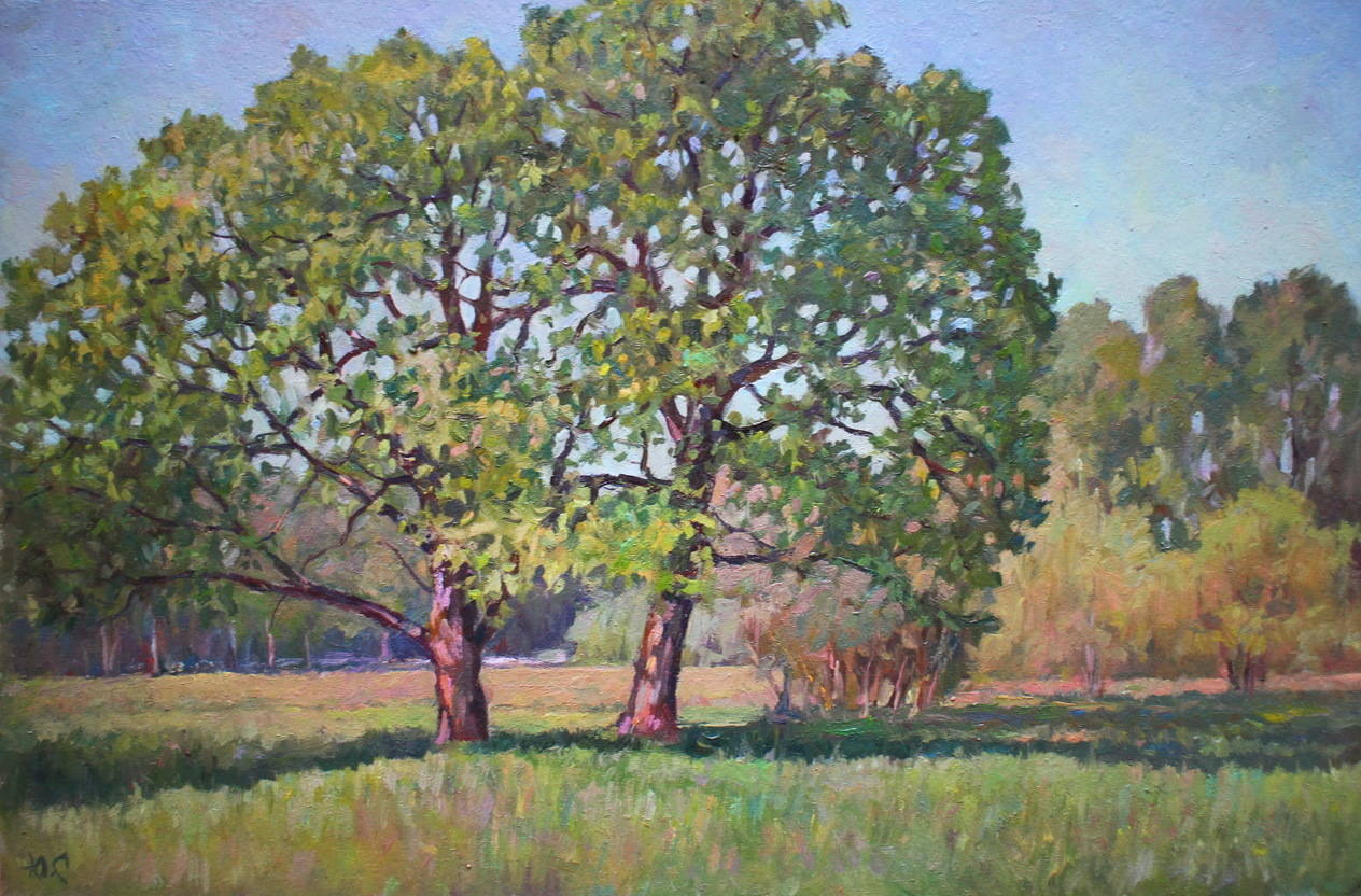 Старые дубы в Царском селе