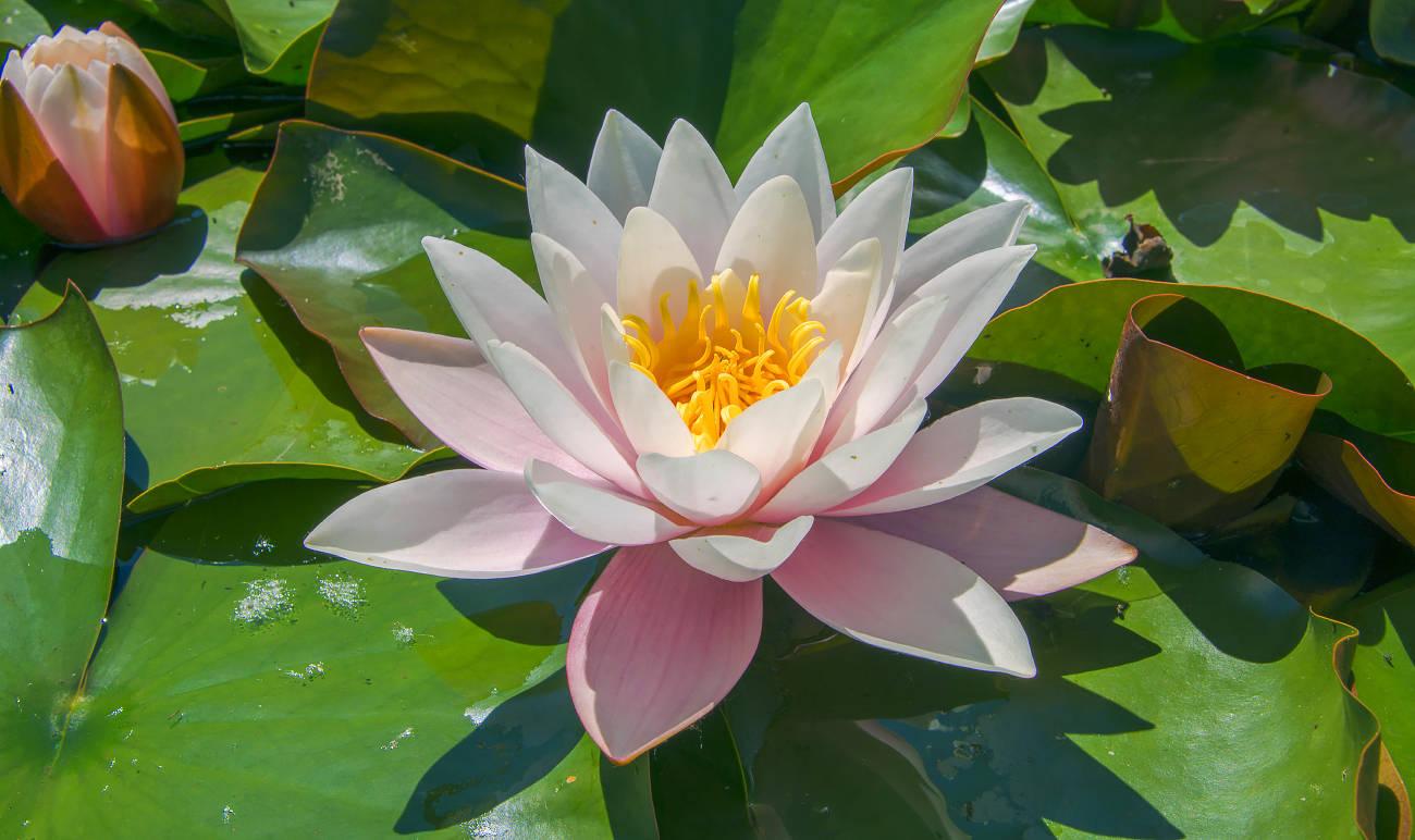 Медитация на розовое