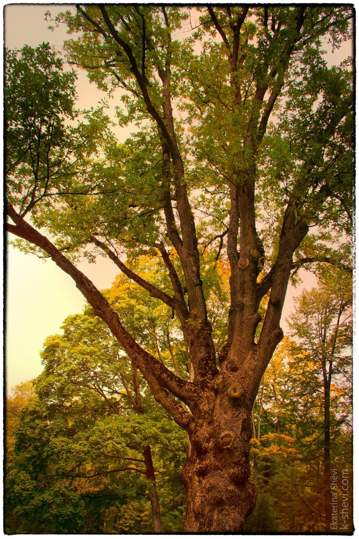 В парке есть уникальное дерево – это 200-летний дуб, посаженный лично Иваном Тургеневым. Писатель очень трепетно к нему относился. 30 мая 1882 года Тургенев, уже пораженный тяжелой болезнью, писал отъезжавшему в его гостеприимное Спасское поэту Якову Полонскому: «Когда Вы будете в Спасском, поклонитесь от меня дому, саду, моему молодому дубу, родине поклонитесь, которую я уже, вероятно, никогда не увижу».