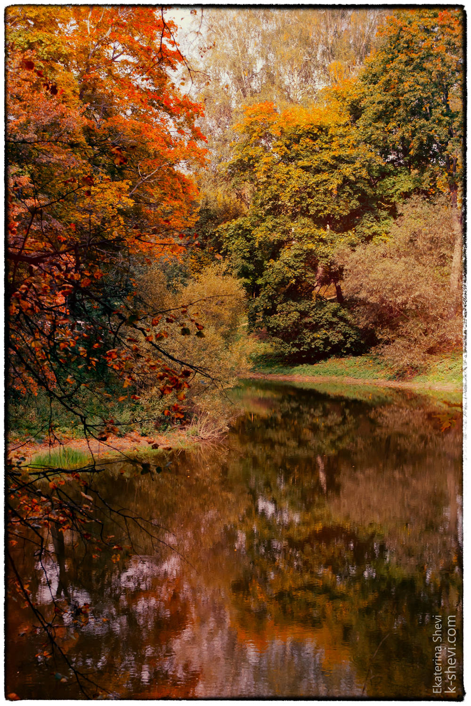 Со времени основания парка сохранилось около 2000 вековых и двухсотлетних лип, ясеней, елей, дубов, серебристых тополей и деревьев других пород, характерных для средней полосы России.