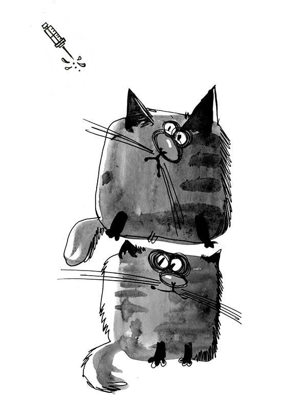 Почему синяк у кошки?