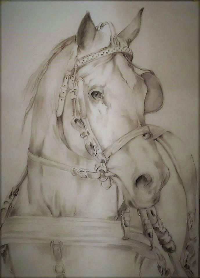 Конь, карандаш, бумага, 40*30, 2019 г