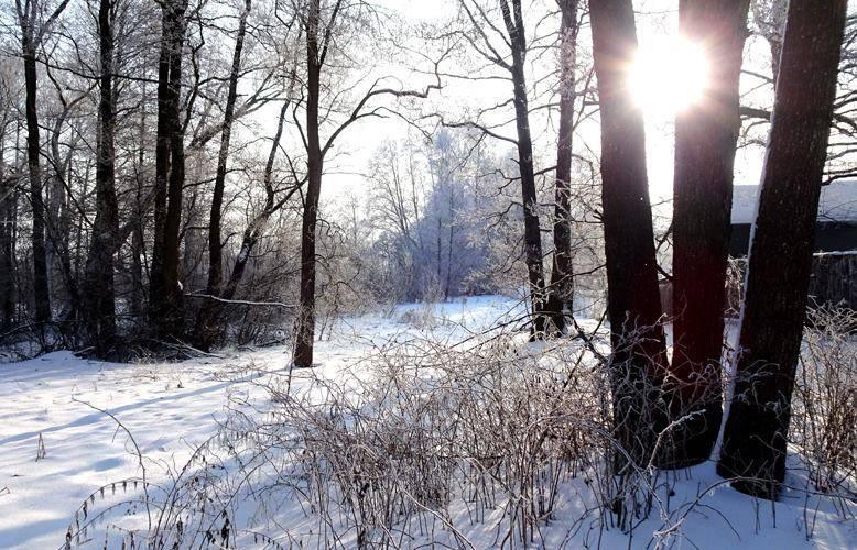 А это фото по выбору моих учеников послужило ТЕМОЙ для урока творчества в студии. Семь участников написали свои версии зимнего пейзажа и блестяще справились с непростым задание-показать цвет в контражуре.