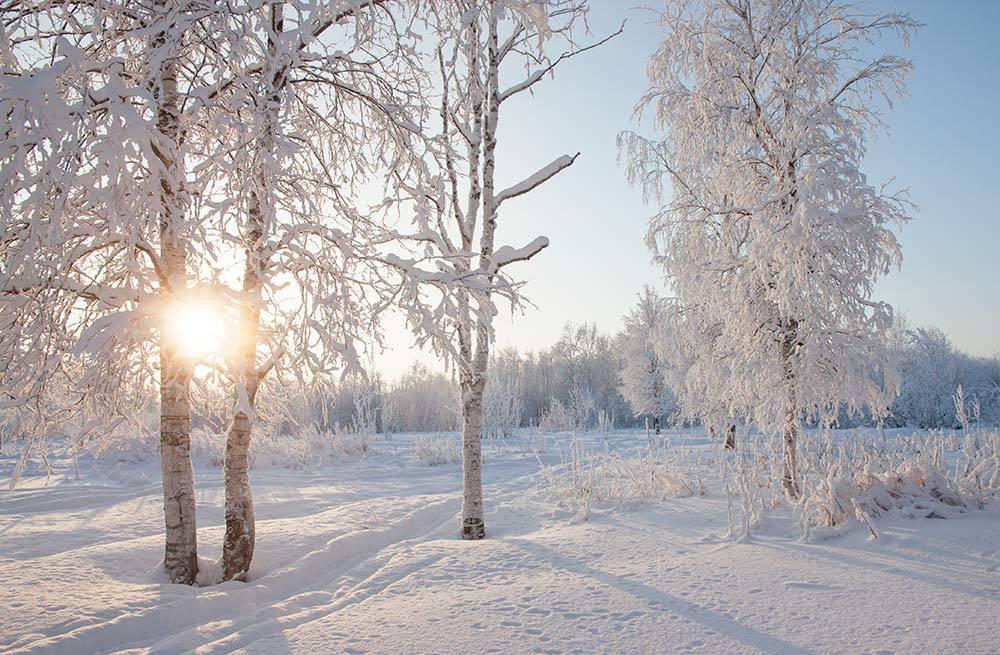 Золотое свечение зимы