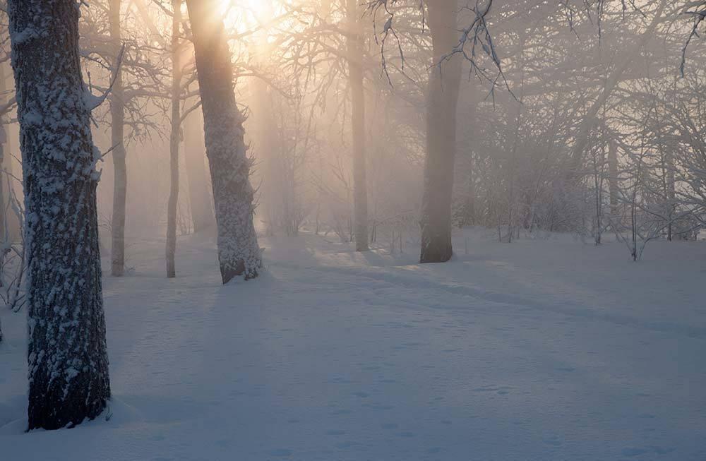 Таинственный свет зимнего леса