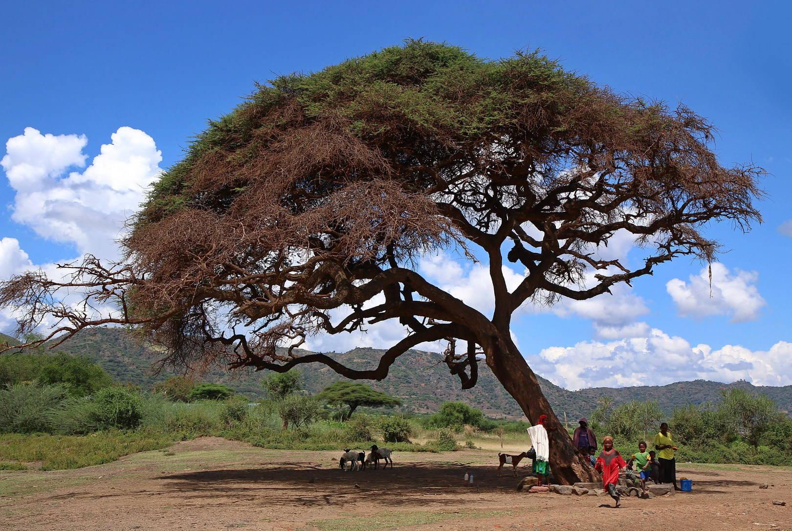 Эфиопские зарисовки