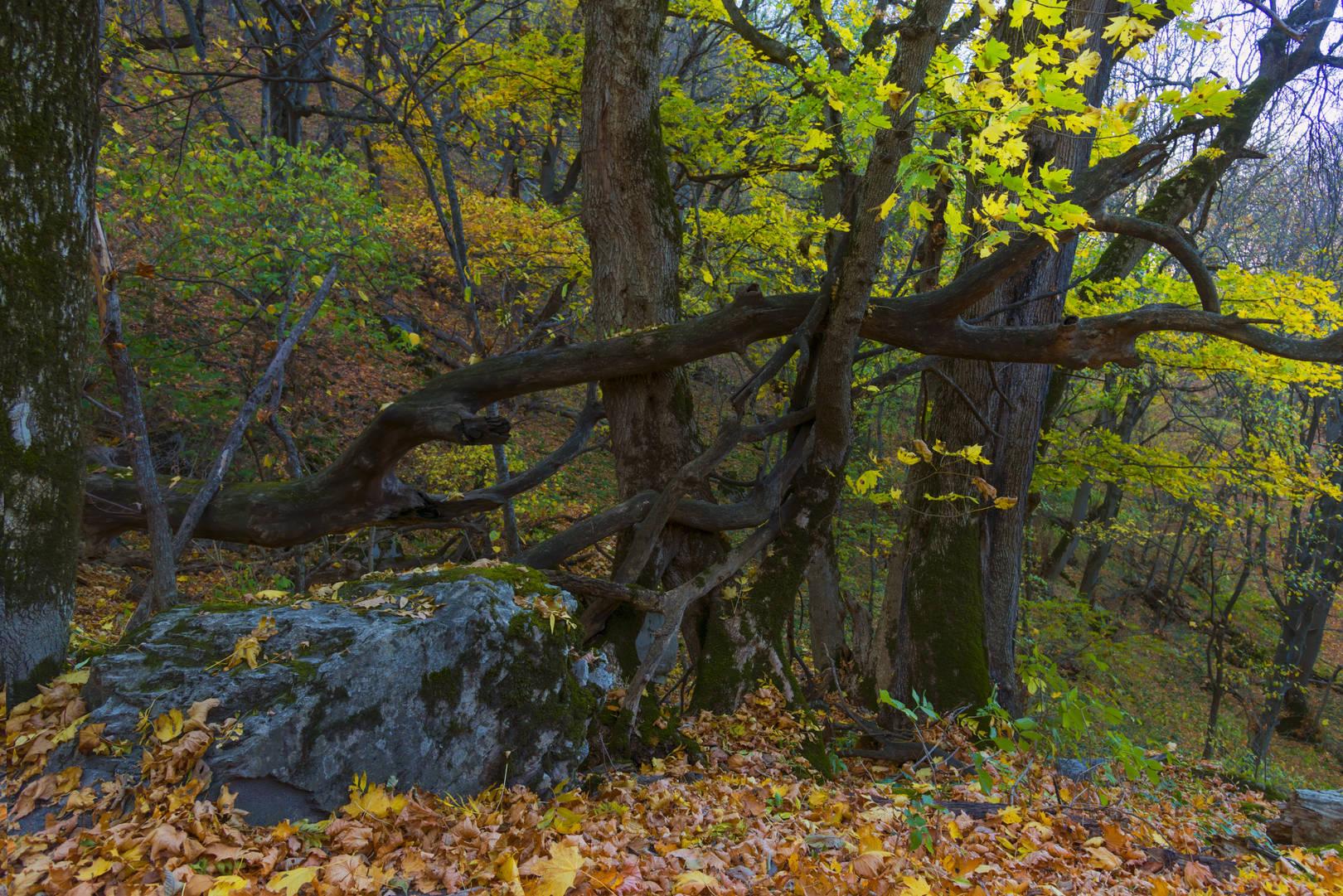 Осенними тропинками