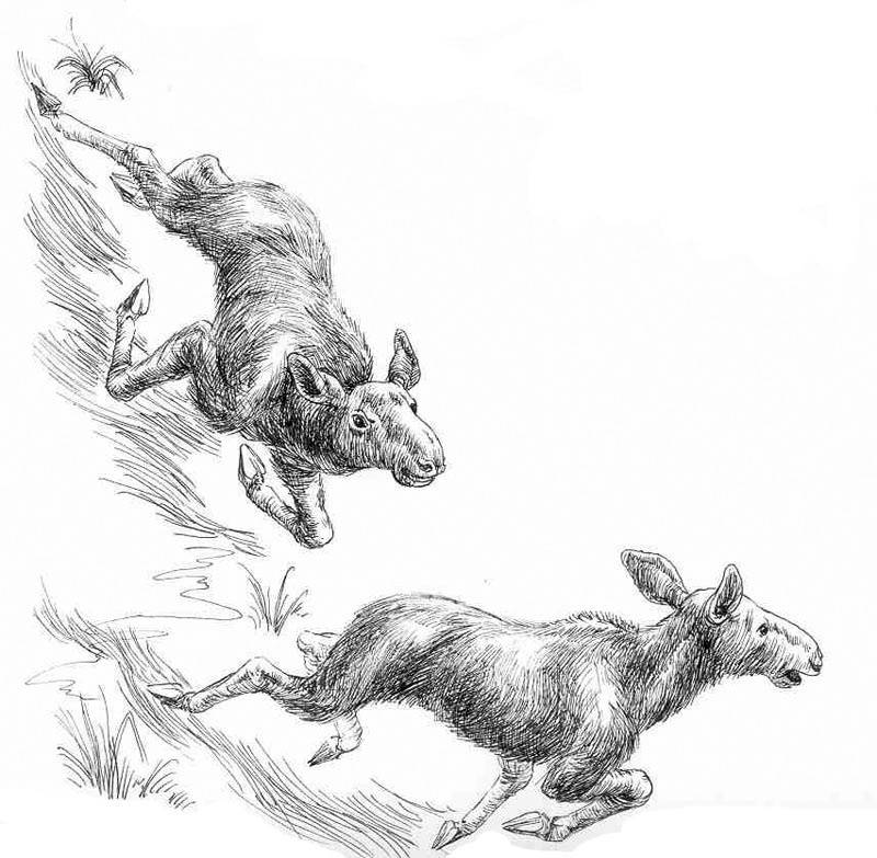 """Ілюстрація до дитячої книги """"Вони жили у зоопарку"""" В. Чапліної тушь, перо"""