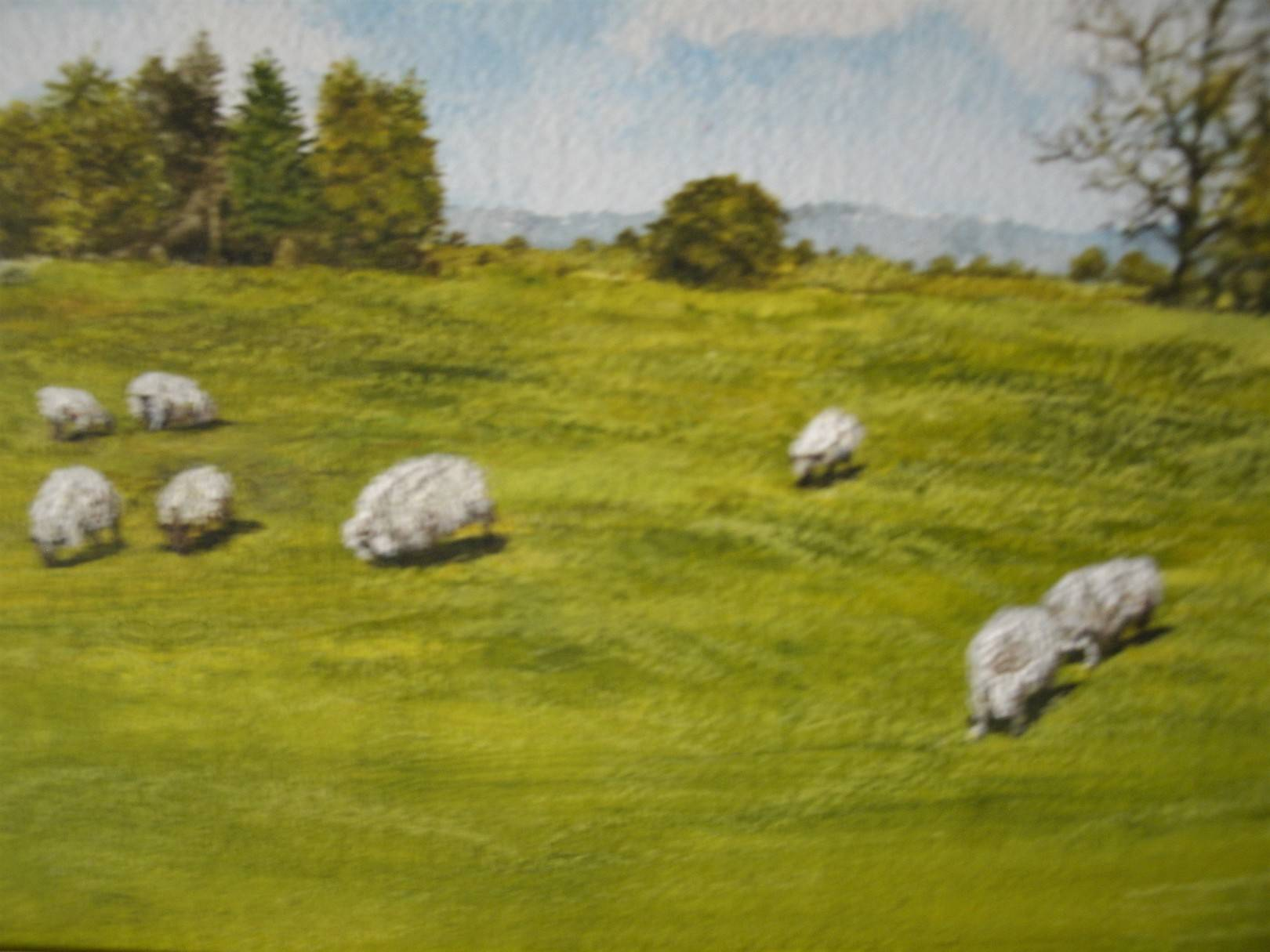 Title: The Sheep  Cartmel  Lake District