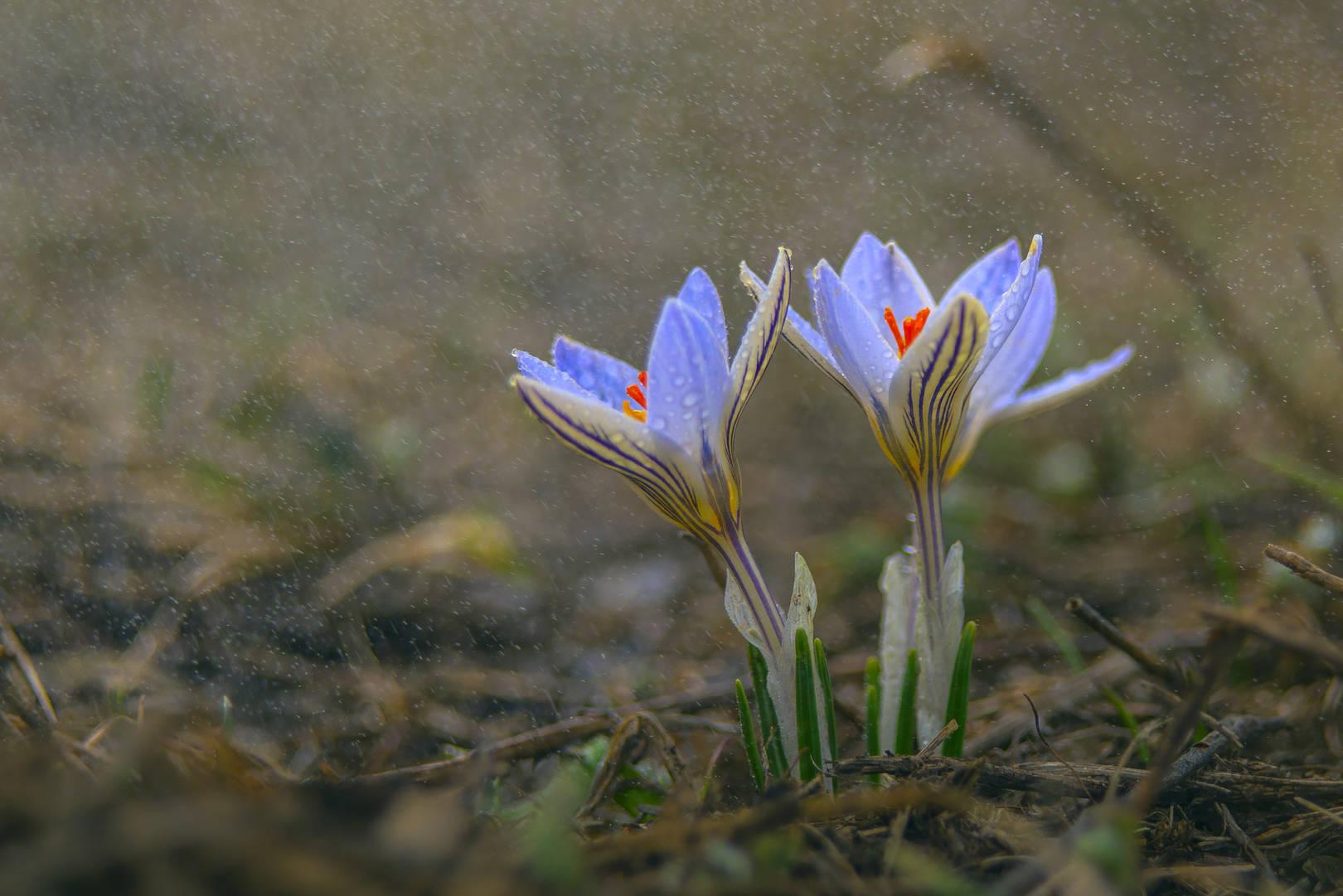 За день до весны