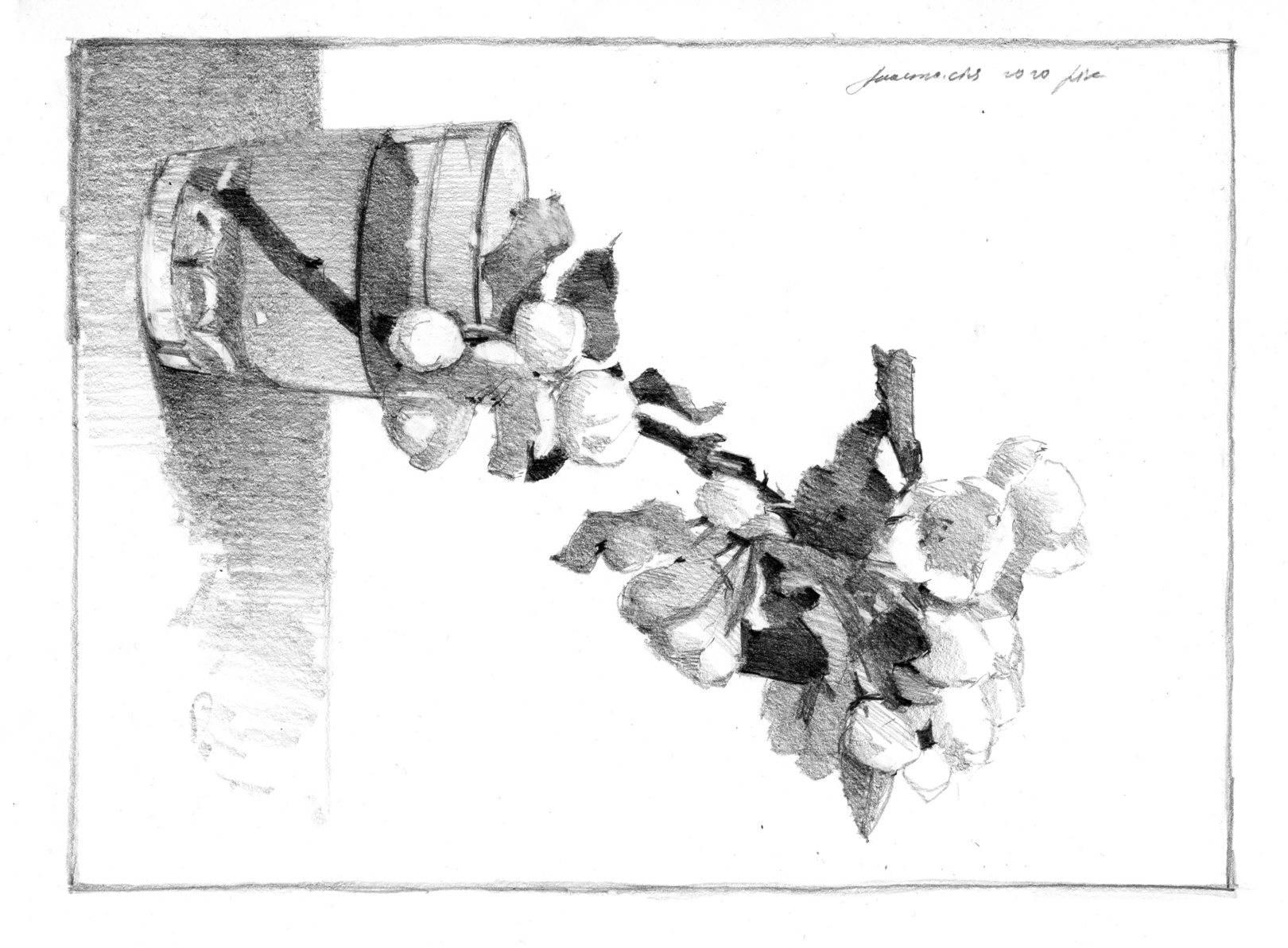 Зарисовки натюрмортов