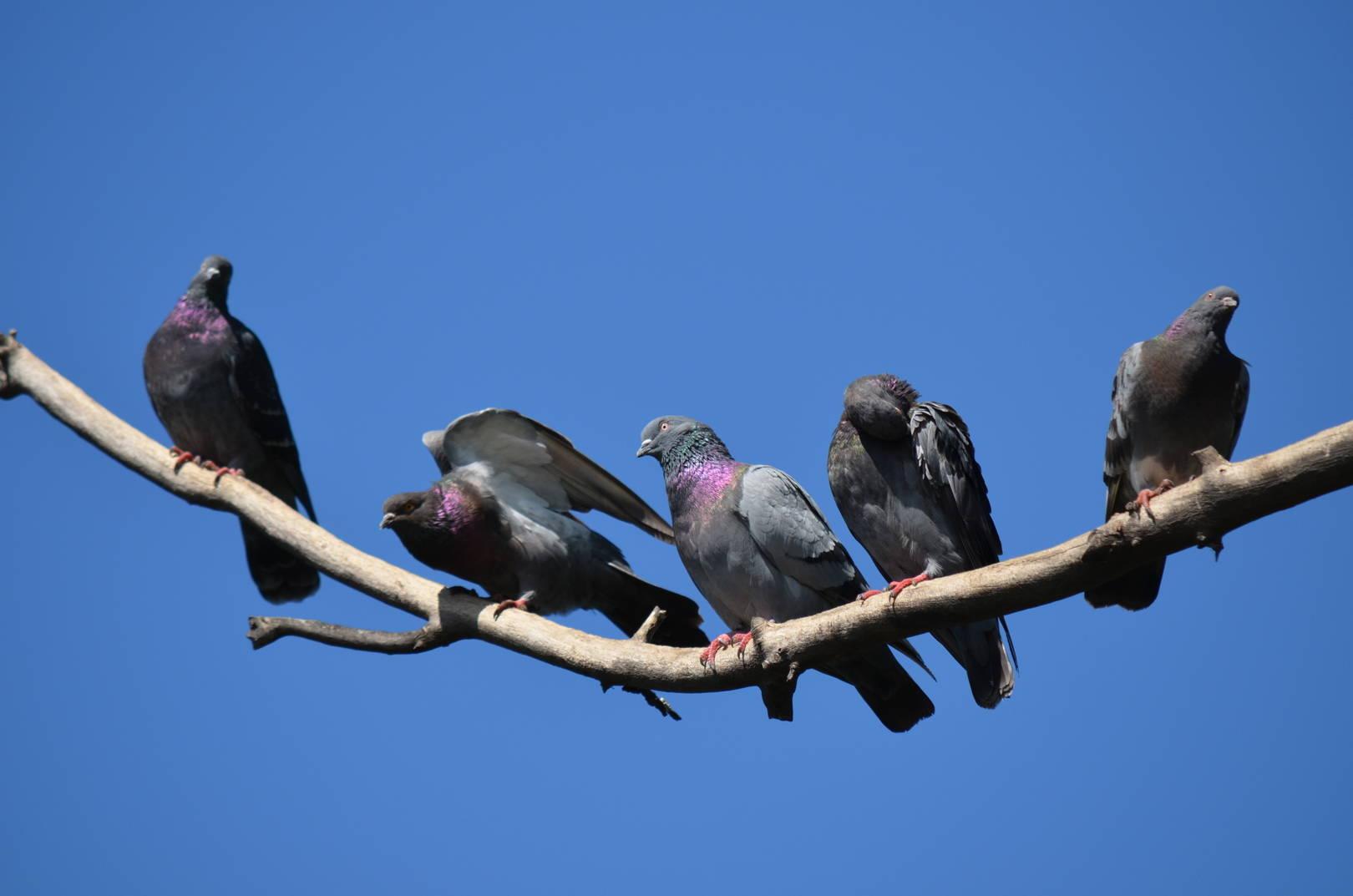 Летающие создания
