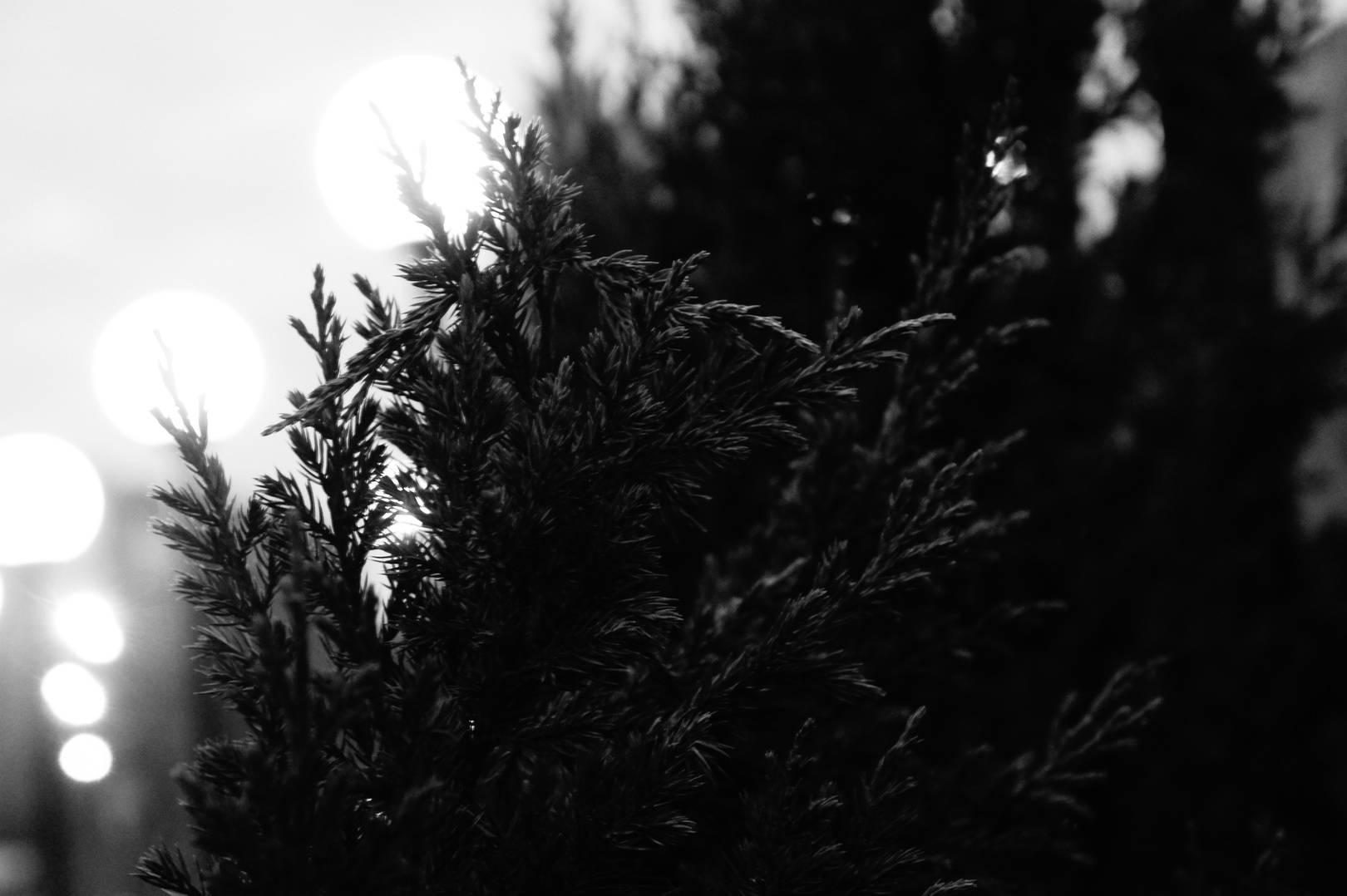 Монохром - баланс черного и белого