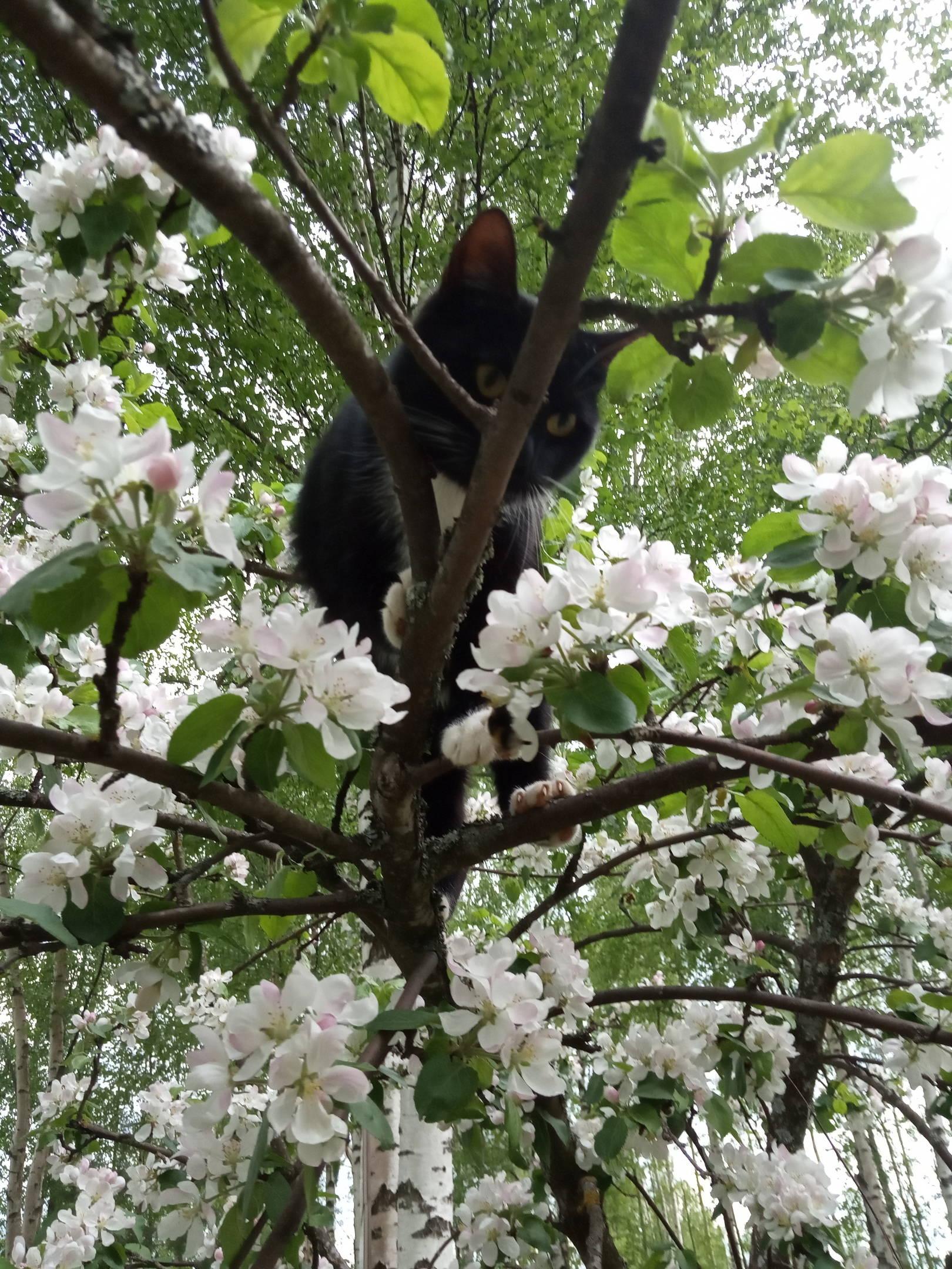 Просто несколько весенних фото, радость момента цветения, долгожданного тепла и лета...