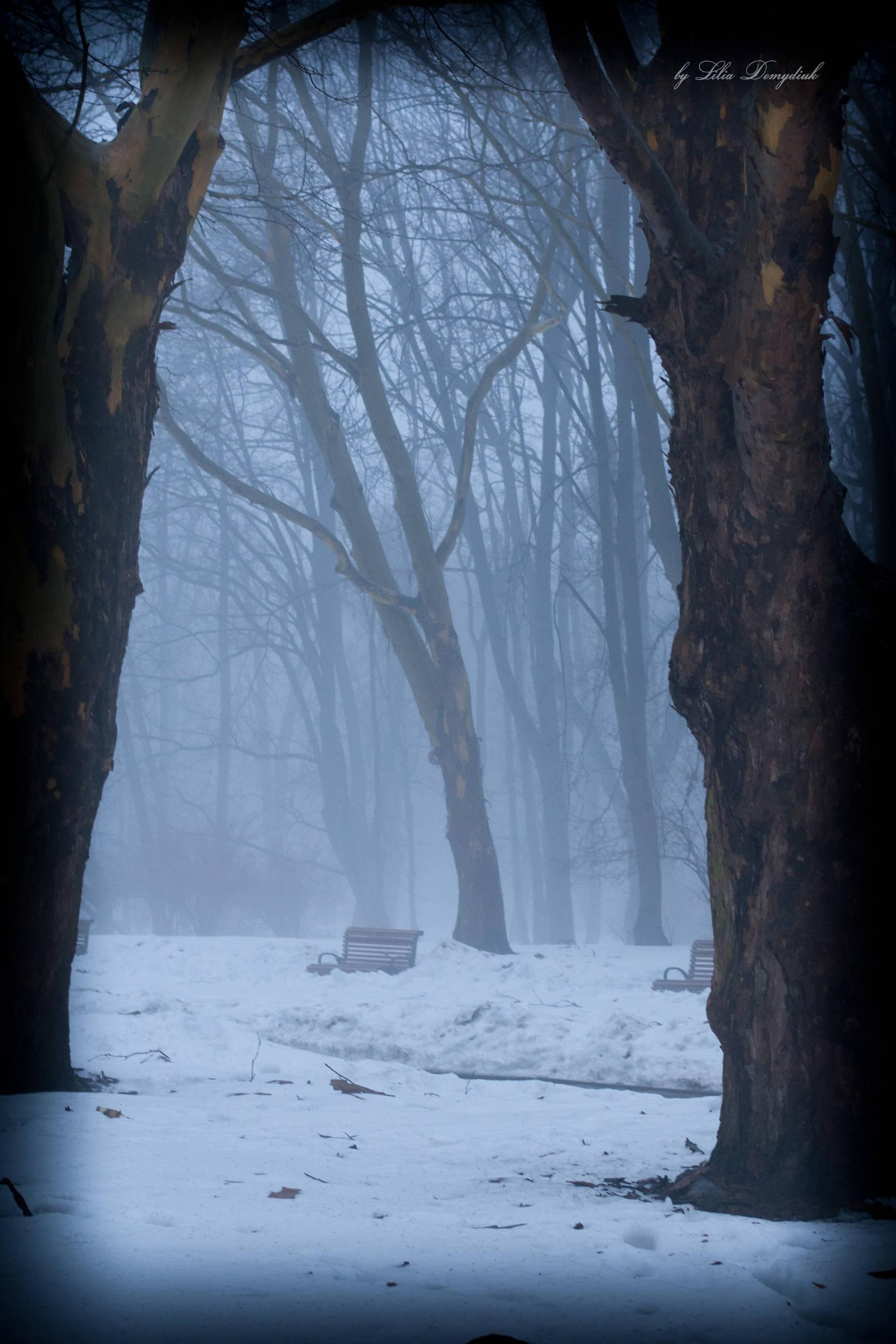 Туман в марте/Fog in March