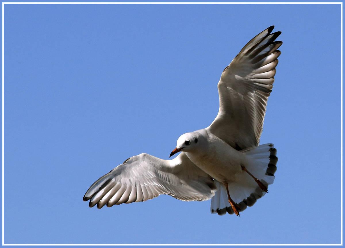 Птицы (Birds)