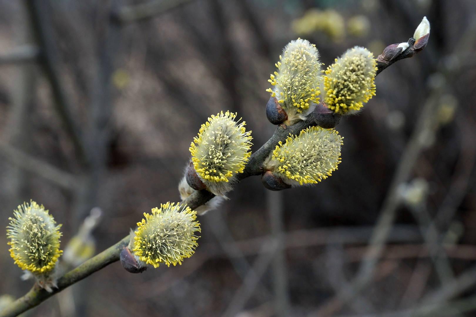 Весна...Пробуждение природы.