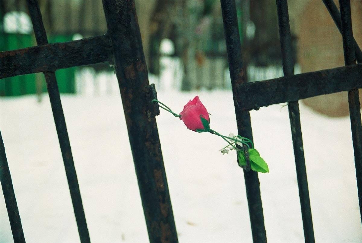 Цветы запоздалые.Belated flowers.