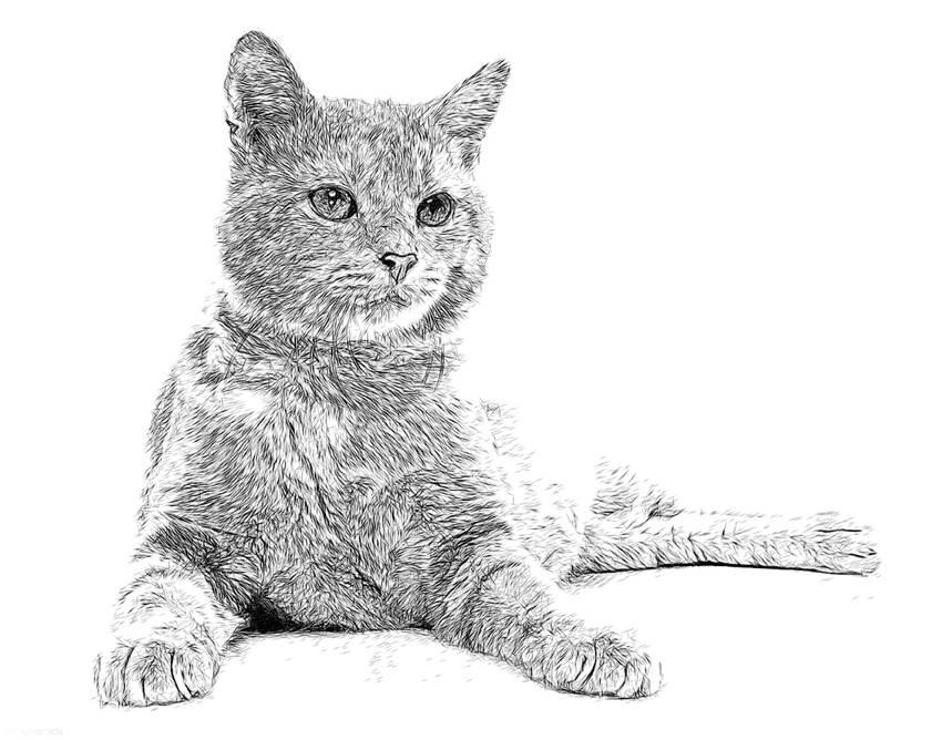 Иллюстрации и рисунки