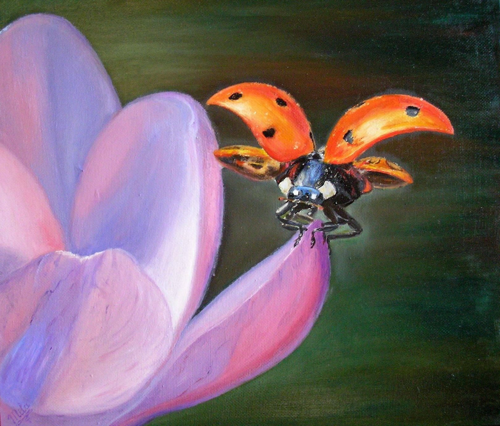 Божья коровкаLadybugх/мoil on canvas30х35