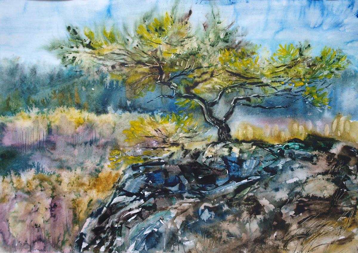 И на камнях растут деревья.  Бумага, акварель, 50х70