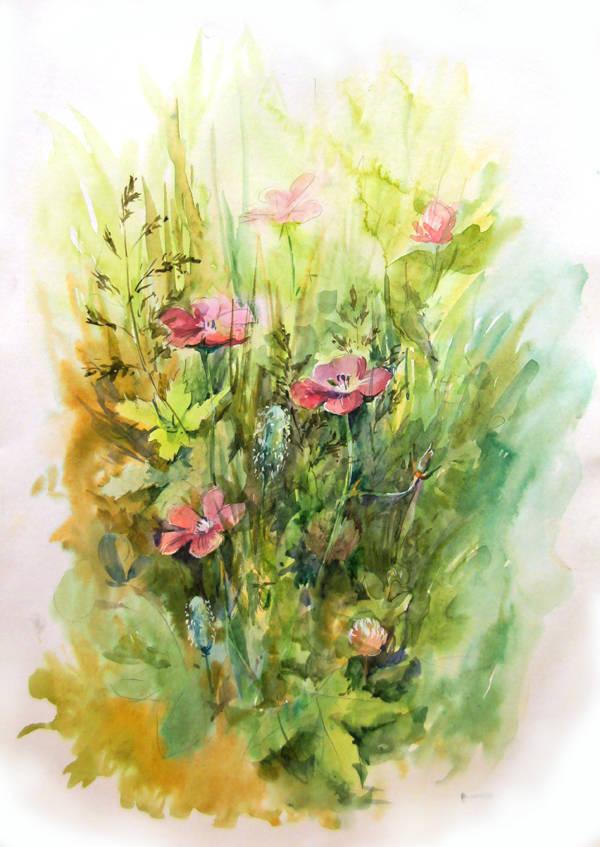 Этюды цветов