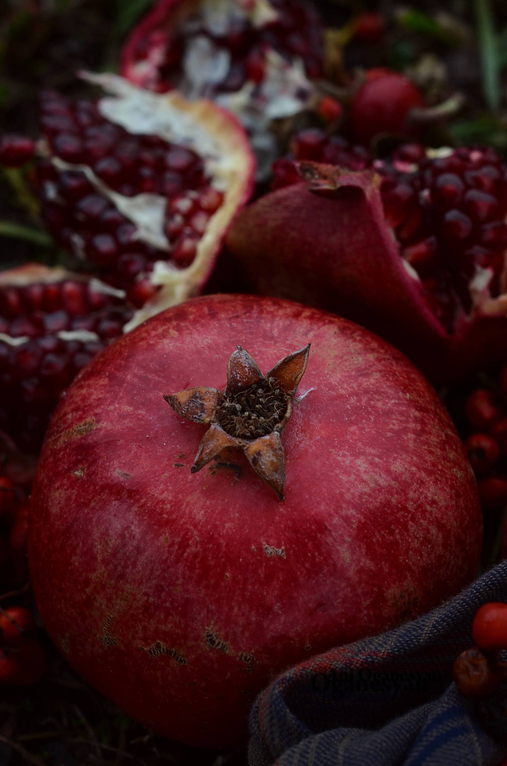 Нур (Pomegranate)