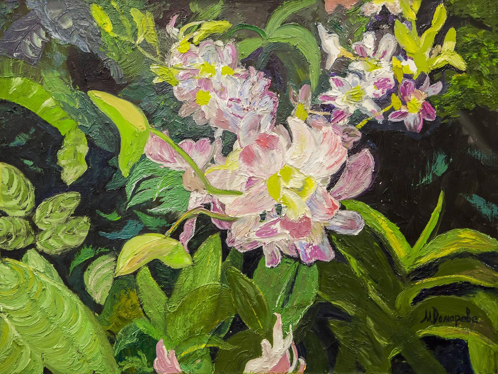 Орхидея, Дондробиум