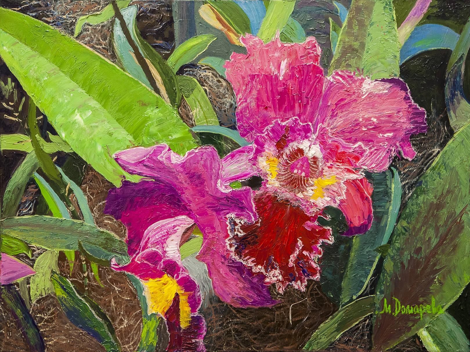 Орхидея, Каттлея