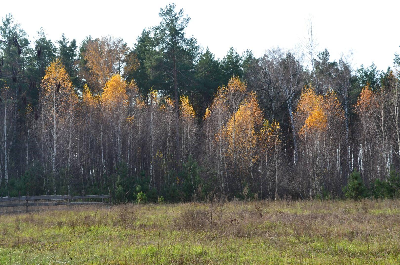Лес.Осень.